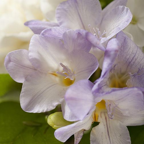 Composition florale Bleu câlin