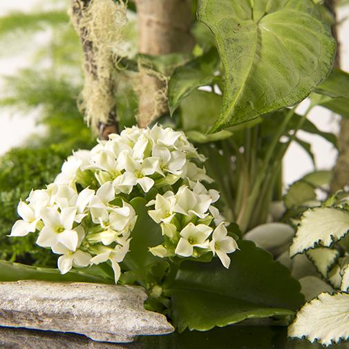Plantes vertes et fleuries Allure