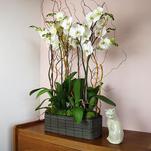 Plantes vertes et fleuries Alba