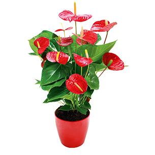 offrir des fleurs un homme quelles fleurs offrir interflora. Black Bedroom Furniture Sets. Home Design Ideas