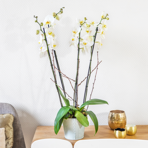 Plantes vertes et fleuries Bianca Mariage