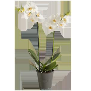 Plantes vertes et fleuries Candide Collection Bon rétablissement
