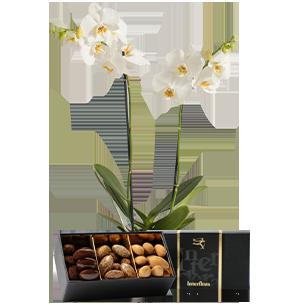 Plantes vertes et fleuries Candide et ses amandes au chocolat Fête des Pères
