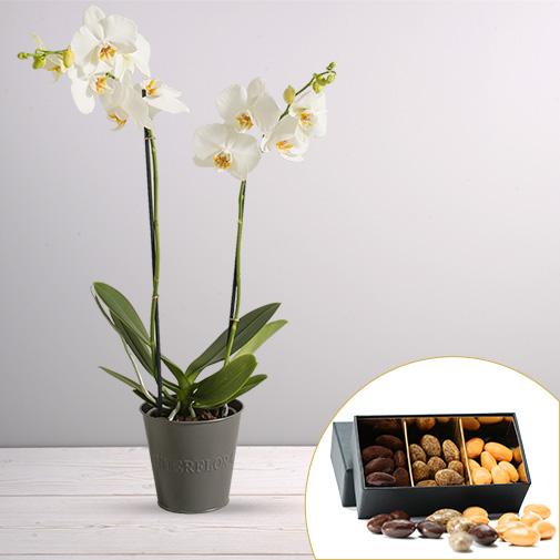 Plantes vertes et fleuries Candide et ses amandes au chocolat