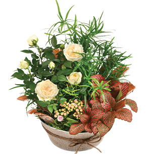 Plantes vertes et fleuries Coin de paradis Collection Bon rétablissement