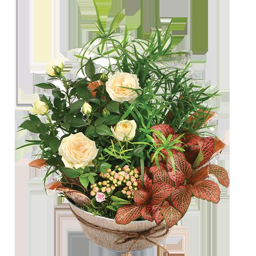 Plantes vertes et fleuries Coin de paradis