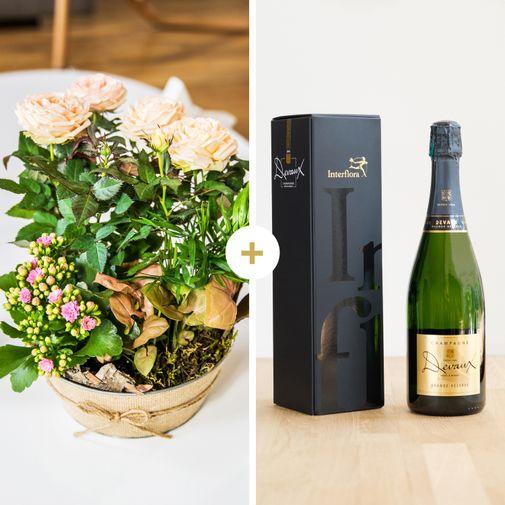 Plantes vertes et fleuries Coin de paradis et son champagne Devaux