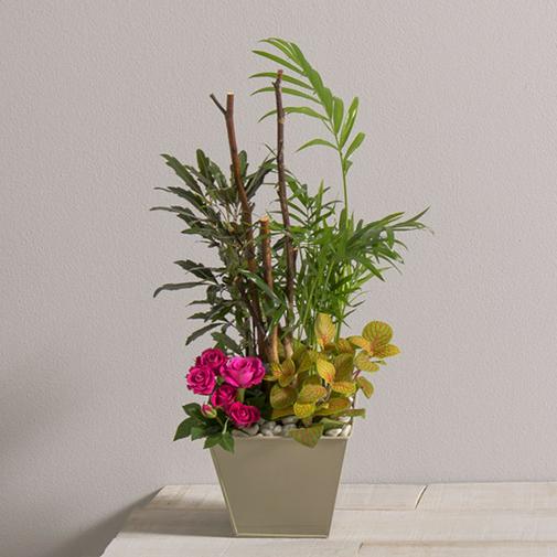 Plantes vertes et fleuries Bonne fête papa