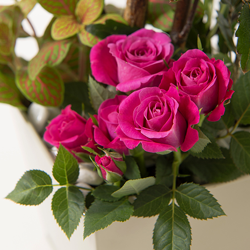 Bouquet de fleurs Déclic et son écrin d'amandes au chocolat