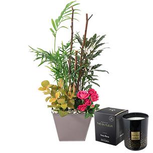 Plantes vertes et fleuries Déclic et sa bougie parfumée Interflora par Esteban Bon rétablissement
