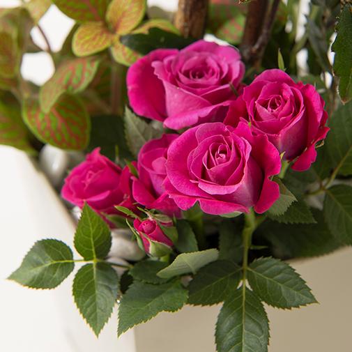 Plantes vertes et fleuries Déclic et sa bougie parfumée Interflora par Esteban