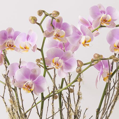 Plantes vertes et fleuries Divine