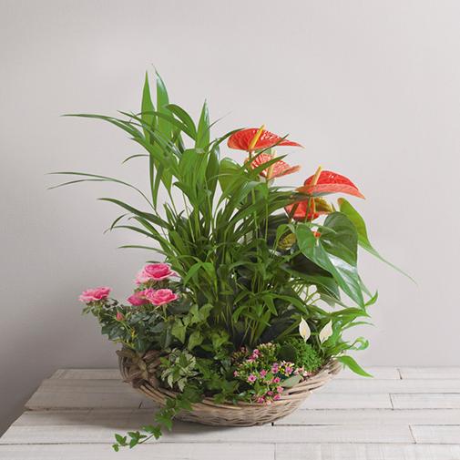 Plantes vertes et fleuries Eden