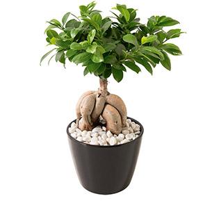 plantes et orchid es livraison de plantes vertes et