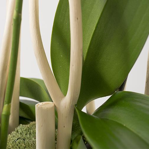 Plantes vertes et fleuries Glamour
