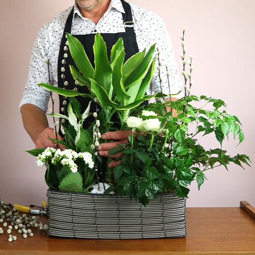 Plantes vertes et fleuries Jardin d'eden