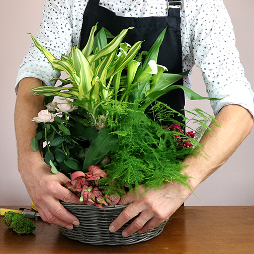 Plantes vertes et fleuries Jardin sauvage