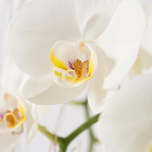 Plantes vertes et fleuries Lilou