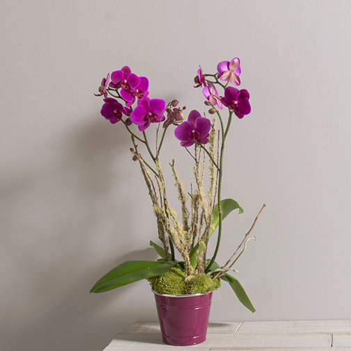 Plantes vertes et fleuries Lola