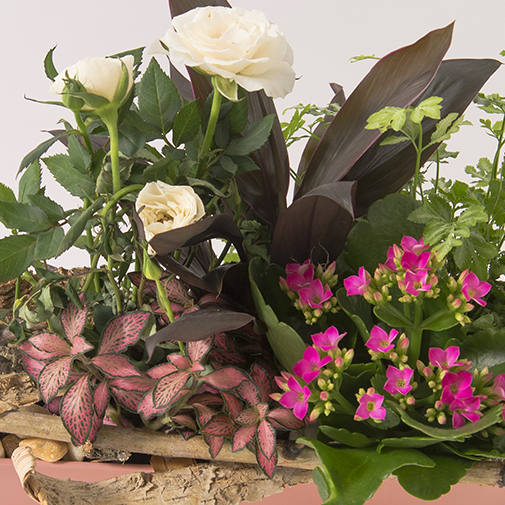 Plantes vertes et fleuries Lucky