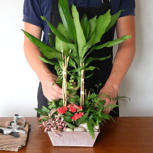 Plantes vertes et fleuries Mikado