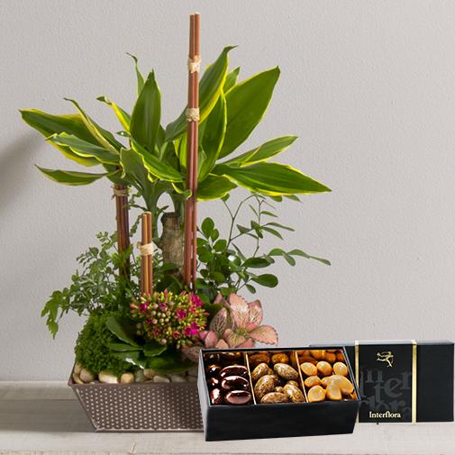 Fleurs et cadeaux Mikado et ses amandes au chocolat