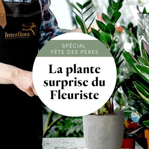 """Plantes vertes et fleuries La plante verte du fleuriste """"Spécial Fête des pères"""""""