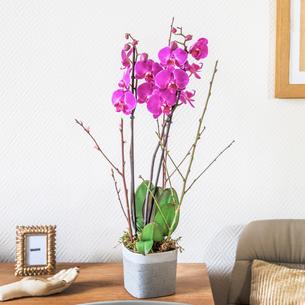 Plantes vertes et fleuries Purple Mariage