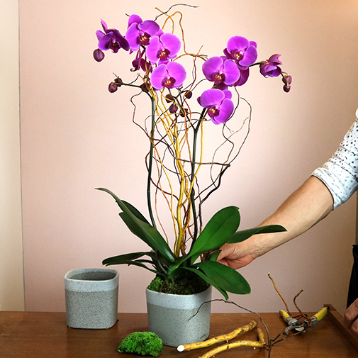 Plantes vertes et fleuries Purple