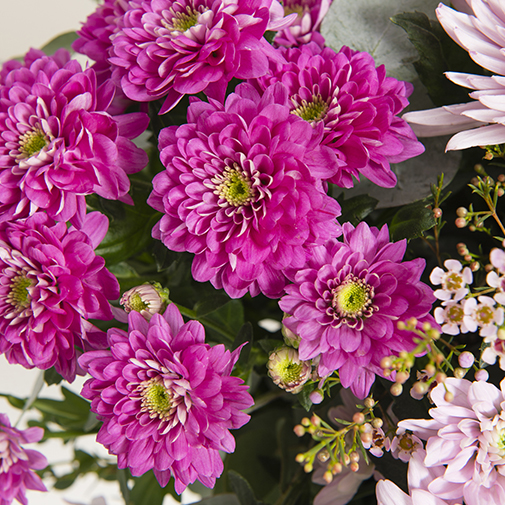 Fleurs et cadeaux Sonate et sa bulle d'eau