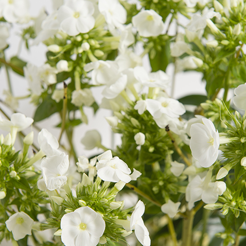 Fleurs deuil Firmament