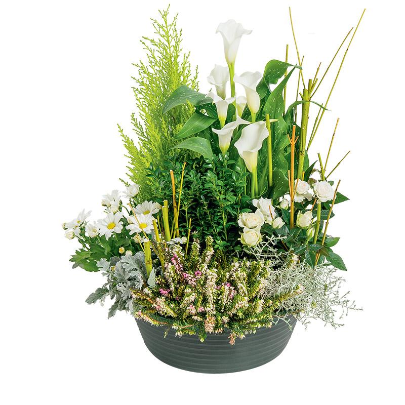 plantes aromatiques au pied des fruitiers par cloclo. Black Bedroom Furniture Sets. Home Design Ideas
