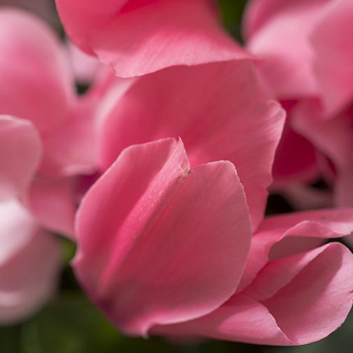 Fleurs deuil Sérénité