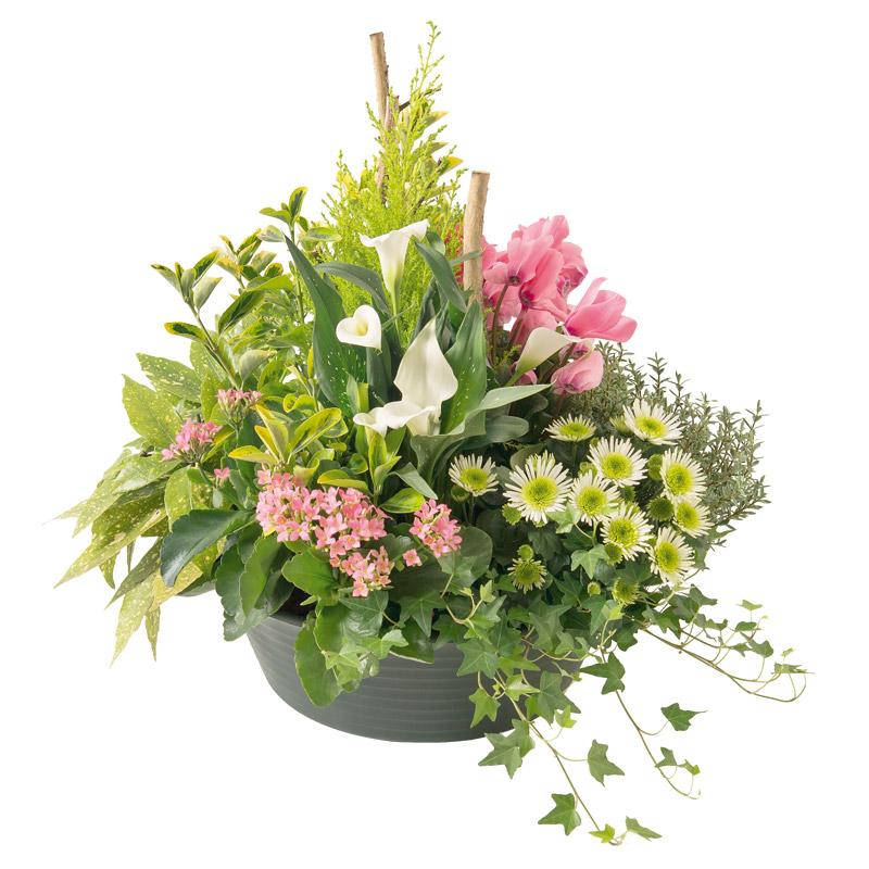 coupe de plantes vertes et fleuries de saison interflora. Black Bedroom Furniture Sets. Home Design Ideas