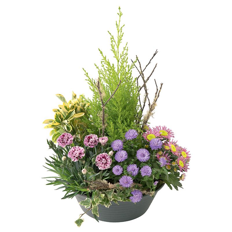 coupe de plantes d 39 ext rieur naturel kalanchoe chrysanth me interflora. Black Bedroom Furniture Sets. Home Design Ideas