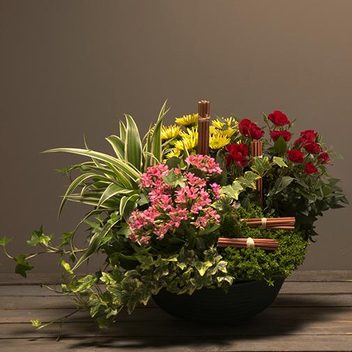 c4fc2dae895c77 Coupe de plantes d'extérieur naturel kalanchoe rose   Interflora