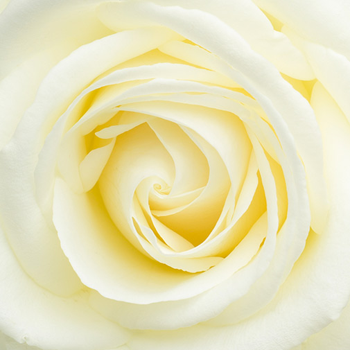 Fleurs et cadeaux Sous le sapin et sa bougie parfumée