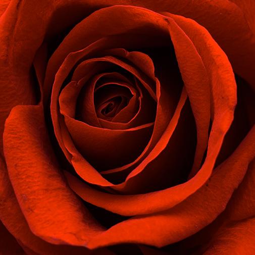 Bouquet de fleurs Au coin du feu