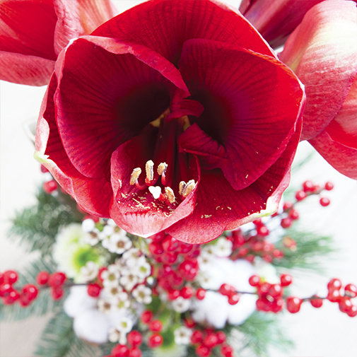 Bouquet de fleurs Sous le sapin et sa bougie parfumée Esteban