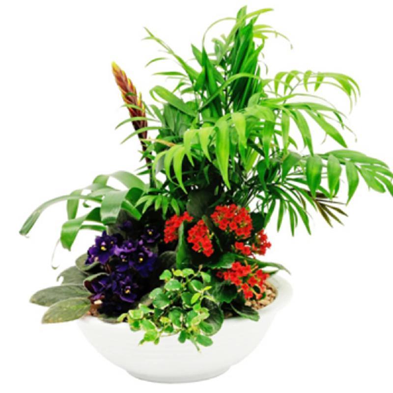 Bouquet de fleurs Mixed plants in bowl