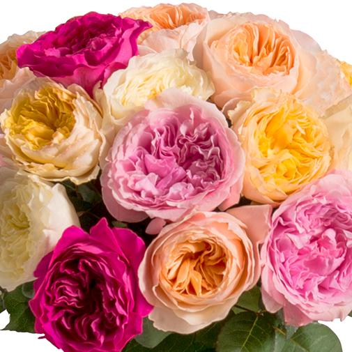 Fleurs et cadeaux Brassée de roses parfumées David Austin