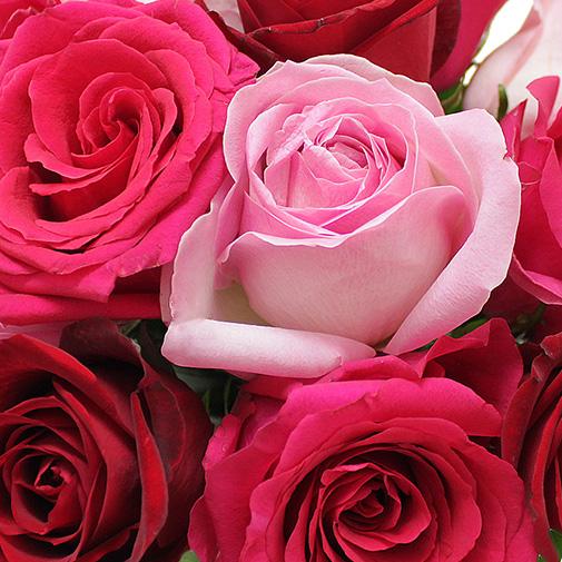 Fleurs et cadeaux Bisou FAUCHON