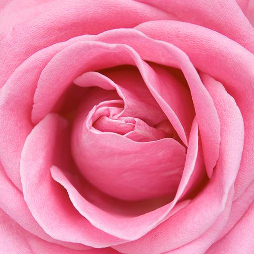 Fleurs et cadeaux Saint valentin gourmande