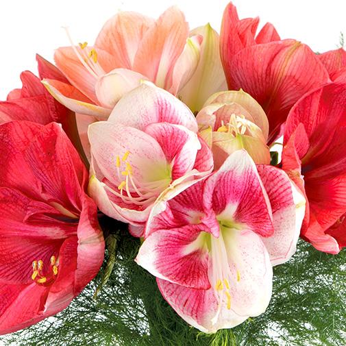 Bouquet de fleurs Brassée d'amaryllis et son coffret beauté Mélodie by L'Occitane