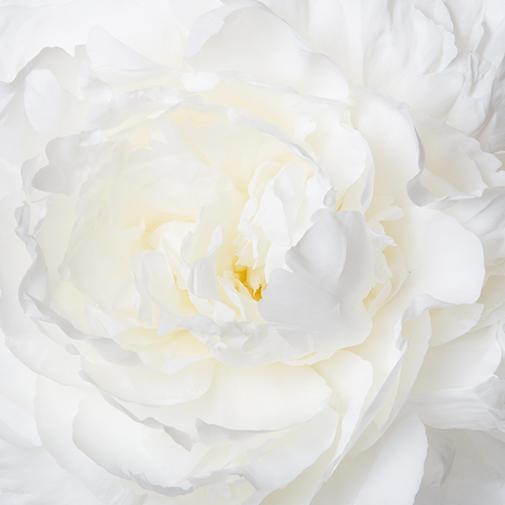 Bouquet de fleurs Brassée de pivoines