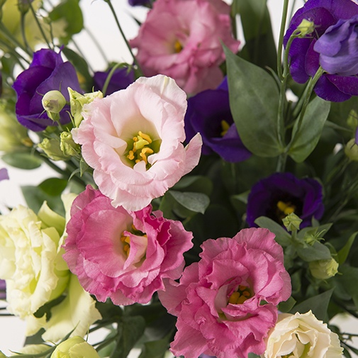 Fleurs et cadeaux Brassée de lisianthus et son coffret Doudou Sophie chérie