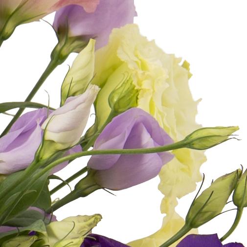 Brass e de lisianthus livraison colis fleurs j 1 for Fleuriste livreur