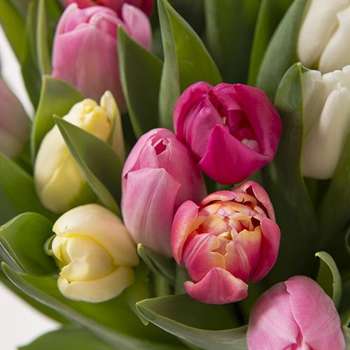 Fleurs et cadeaux Brassée de tulipes et ses madeleines FAUCHON
