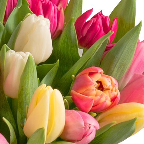 Brass e de 30 tulipes rapidit livraison en colis for Livraison tulipes