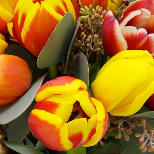Brass e de tulipes et d 39 eucalyptus livraison par for Livraison tulipes